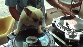 The DJ Dog