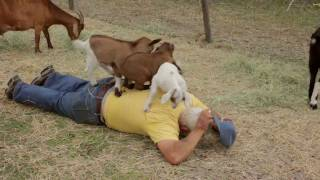 Goat Massage