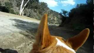 Go Pro Dog- Cool First Person Dog View