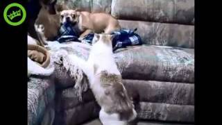 Dog is Afraid of Cat