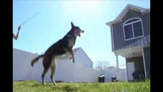 Amazing Jump Roping Dog