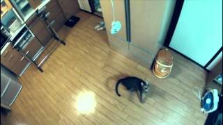Cat can Jump Really High with Slow Motion