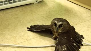 Cute Owl Chillin by the Fan