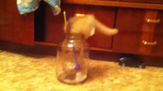 Kitten Falls into a Jar